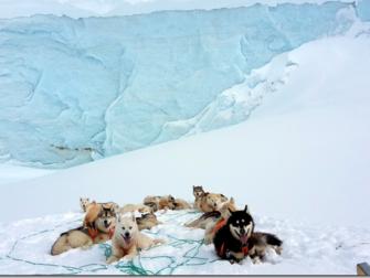 Nos chiens de traîneaux au Groenland
