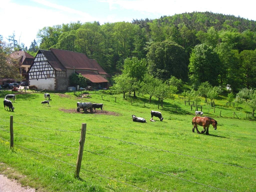 Décor champêtre des Vosges du Nord