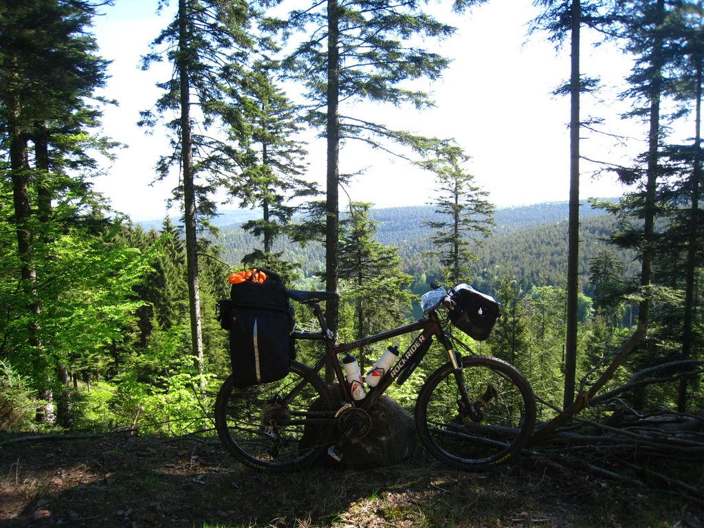 La forêt à perte de vue