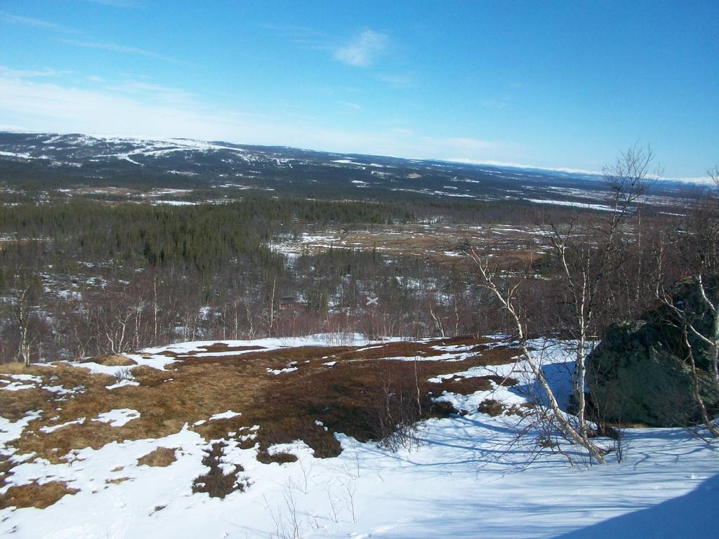 Au pied des monts Getvalen et Stornasen, la forêt de pinèdes s'étale à nos pieds.