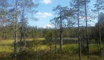 Étangs, tourbières et marais dans le Riisintunturi